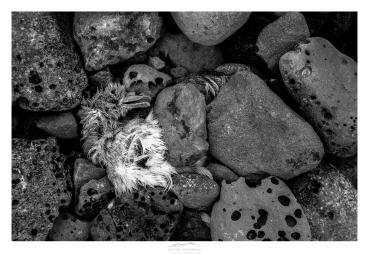 mathieu-ausanneau-fulmar-boreal-01